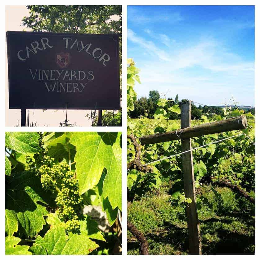 Carr-Taylor Wines - Perfect Afternoon Wine Tasting