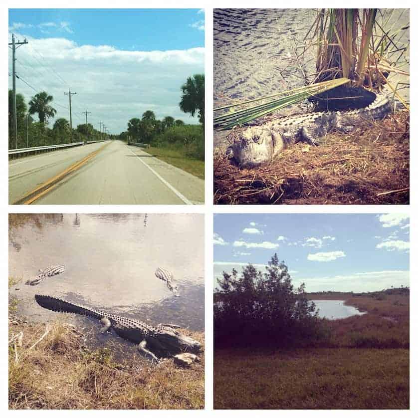Key West - Everglades