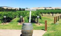 Wine Regions in South Australia
