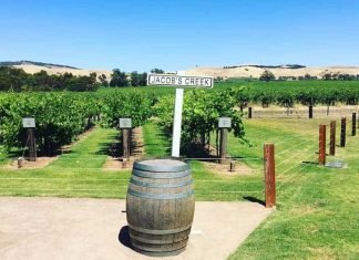 Wine Regions in South Australia